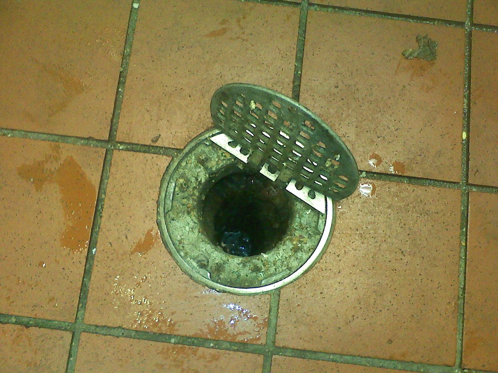 Drain flies bathroom - Another Dirty Drain Needing Treatmentdrain Flies