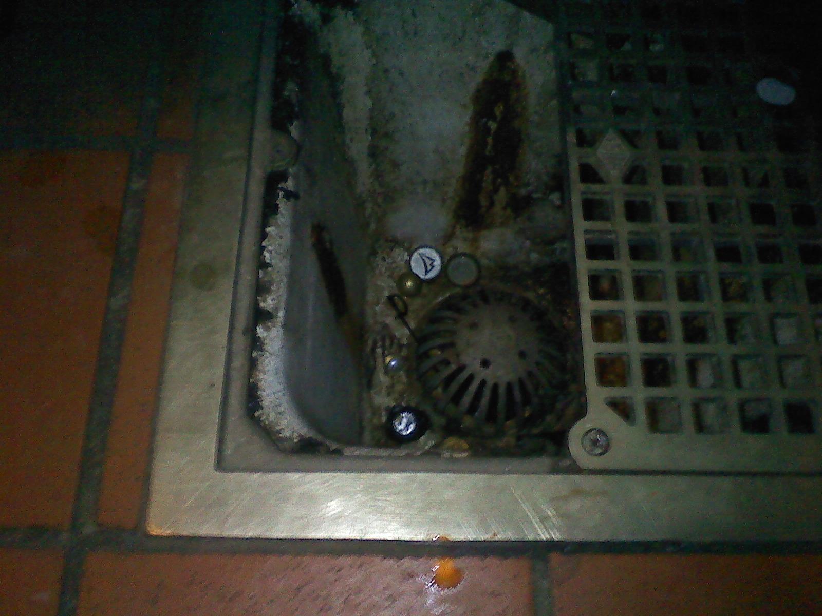 Drain flies bathroom - An Example Of A Dirty Drain Protek Treated For Drain Flies